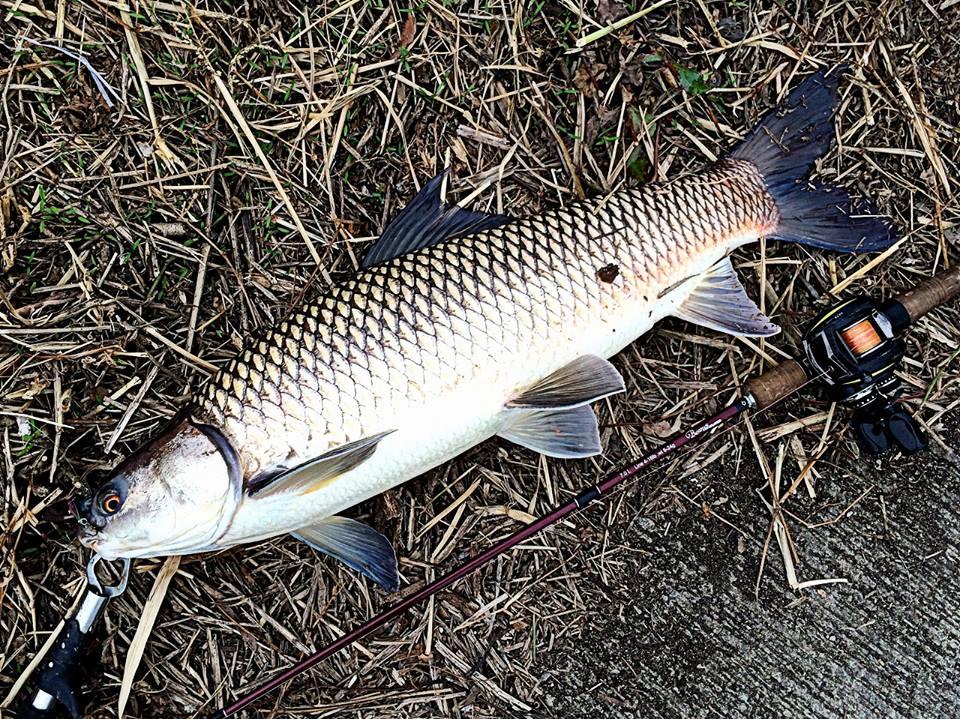 ケンヒーと言うコイ科の魚 | Fishman公式ブログ