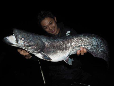狙う魚は日本三大怪魚の一種、ビワコオオナマズ