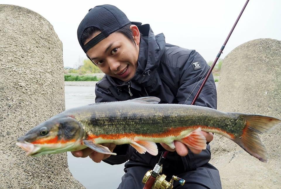 多摩川春の風物詩、マルタウグイを釣ってきました