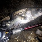 河口での釣りが多いこの時季、頼る竿はベンダバール