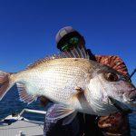 真鯛が3m前後のシャローエリアで狙える釣り天国モートンベイ