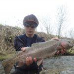 一度も釣果を聞いたことがない川で良いコンディションの雌の虹鱒!