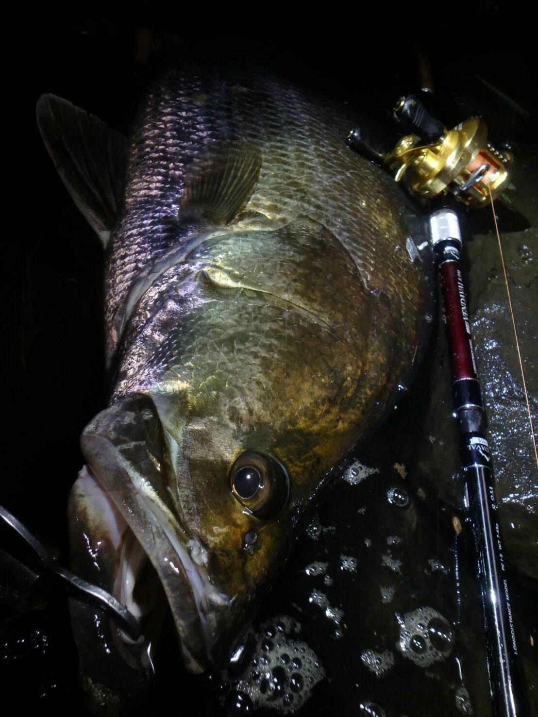 春、わたしの魚釣りの一大イベントと言えばカワヌベ(アカメ)!