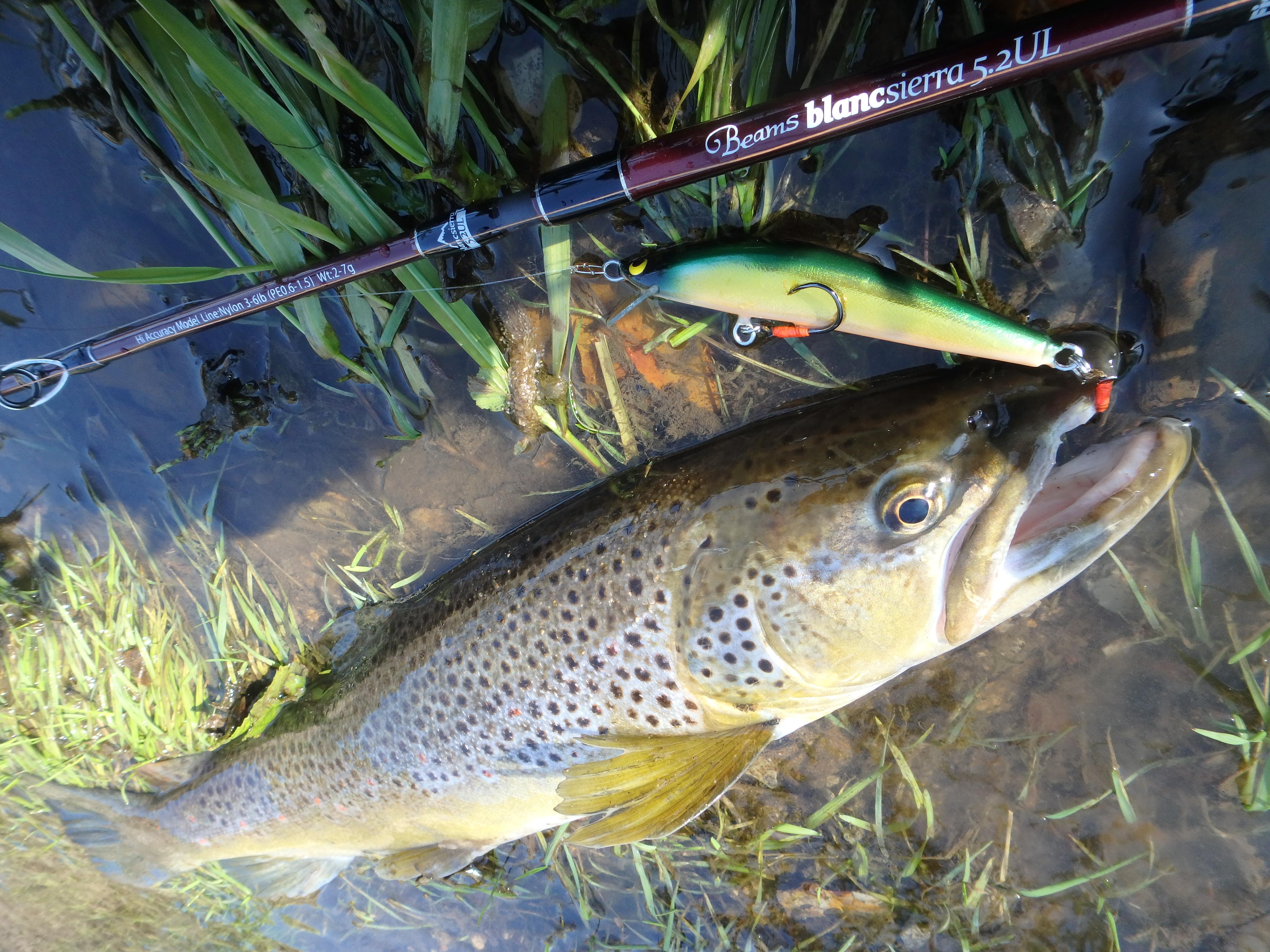 友人に作って貰ったハンドメイドバルサミノーで釣ろうと投げ倒して来ました。