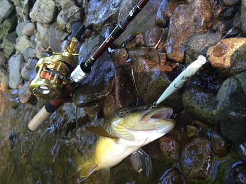 思わぬゲストと、ブラウンの釣れる小さな川へ
