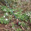 春が進んだ新潟の渓流は、今が野花の最盛期。