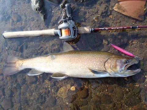 50センチを超えるような大物のイワナを釣ってみたい