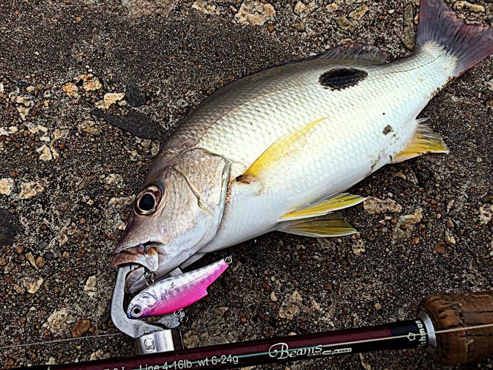 今回は後続のFishmanロッドに強い遺伝子を残したナナマルでの釣行