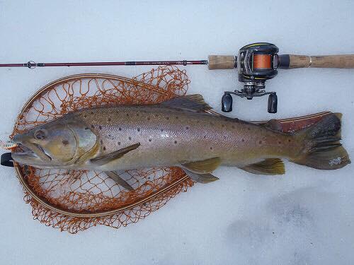 雪代時期に釣った60オーバーのブラウントラウト