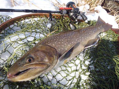 なんと59センチの大岩魚を釣り上げてしまいました Fishman公式ブログ