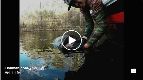 今年のモンスターマーレーコッドに至るまでの釣行記動画をまとめました!