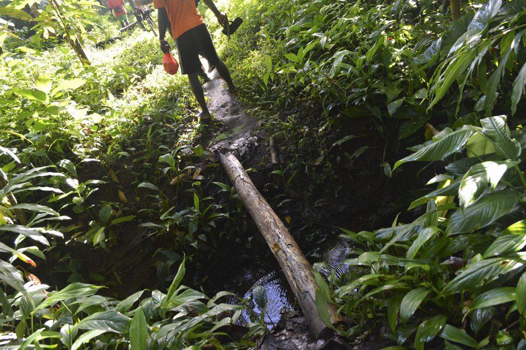倒木で小川を渡る