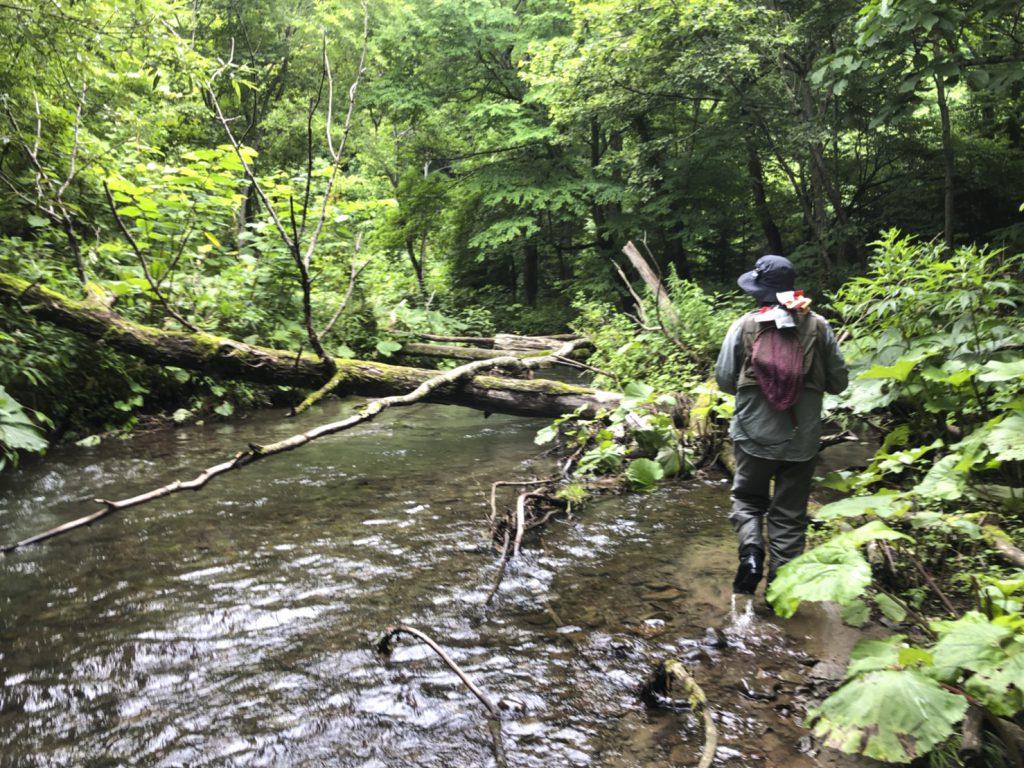 渓流の倒木