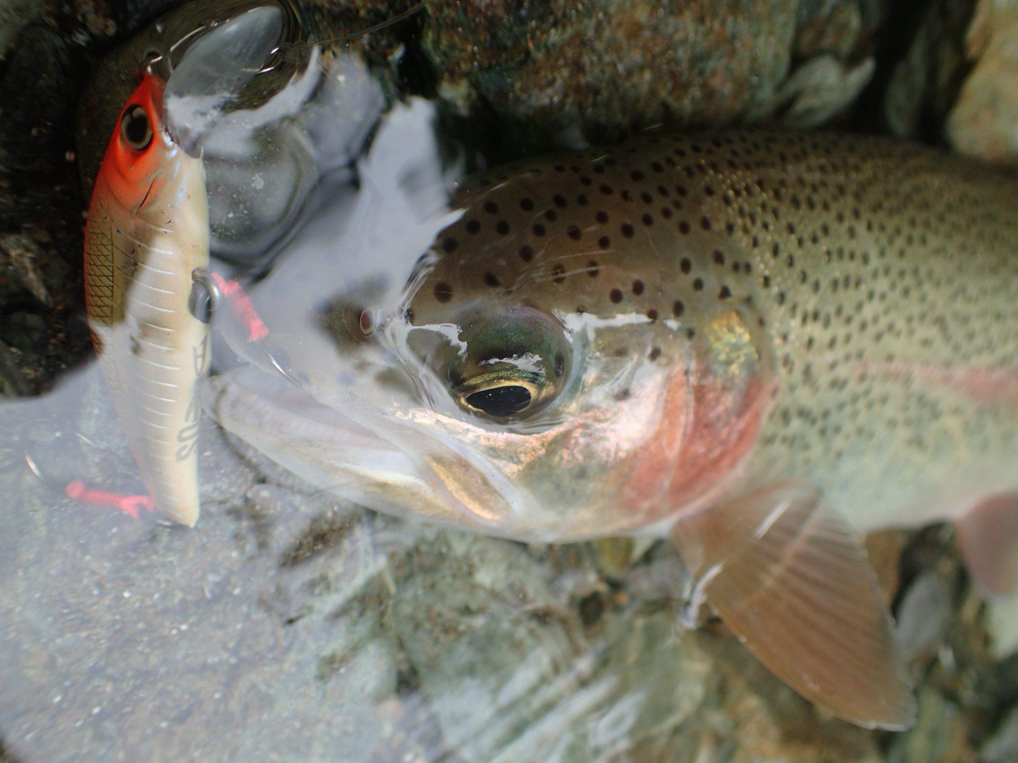 10数年振りに訪れた渓流をひたすら釣り上がってみたときの釣行記