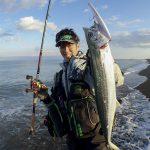 【回遊魚の到来】新潟にもサワラが!