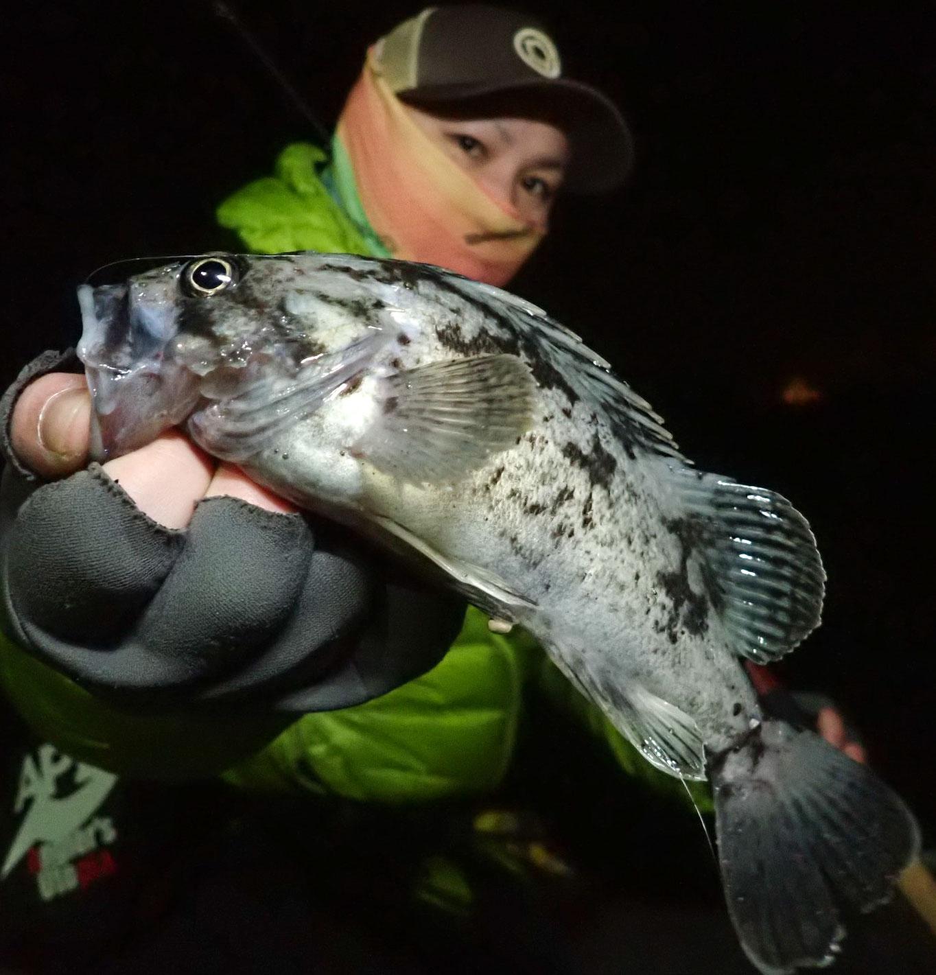 冬の日本海で多魚種と戯れる