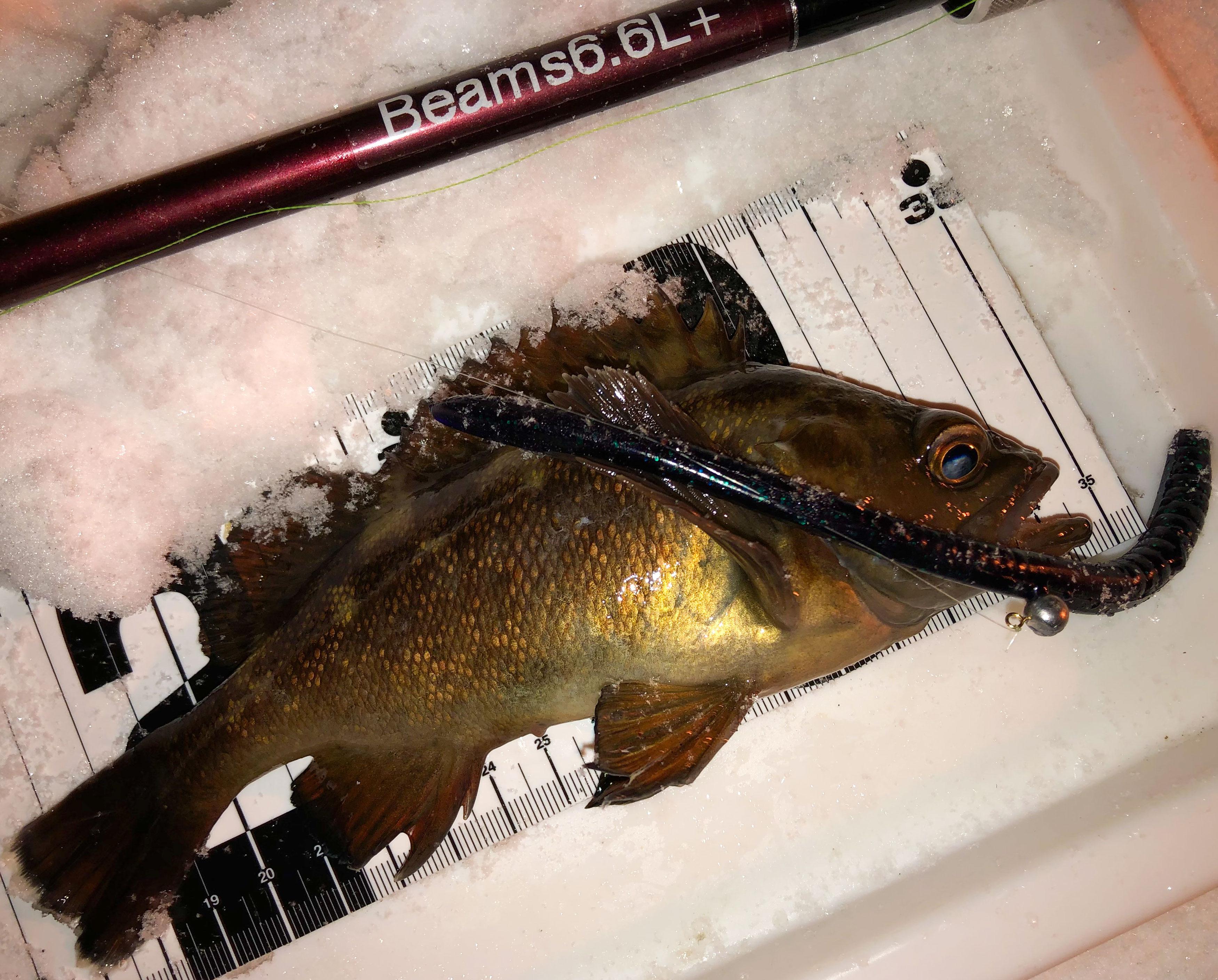 AUX霜上が北海道の冬の定番リグでエゾメバルを狙う。ロックフィッシングはお手軽で楽しい冬の癒し釣り!
