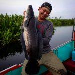 漆黒に染まる雷魚⁉︎ジャイアントスネークヘッド(トーマン)東南アジア