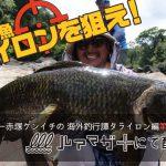 南米の怪魚タライロンを狙え!怪魚ハンター赤塚ケンイチが送る海外釣行譚の第二弾がルアマガ+で配信中!