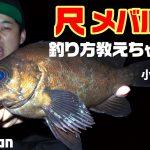 FishmanTV新作公開!尺メバルのライトゲーム 自分の身を守るオススメ安全装備もご紹介