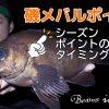 磯メバル釣り 重要ポイント